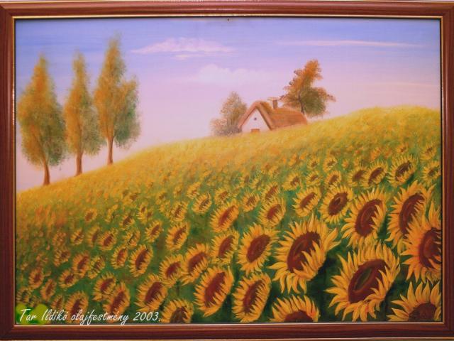 Tar Ildikó olajfestmény 2003. Napraforgós domboldal, 50×70